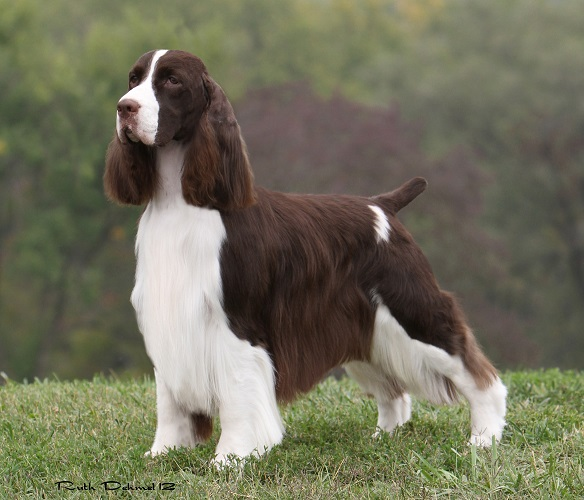 GCh Paradise Flying Without Wings 'Donovan'