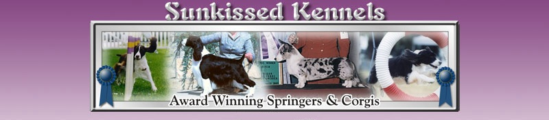 Sunkissed English Springer Spaniel and Cardigan Corgi Breeders